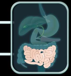 intestinodelgado