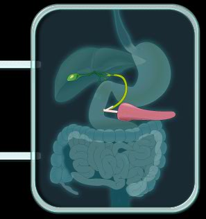 pancreasyviasbiliares
