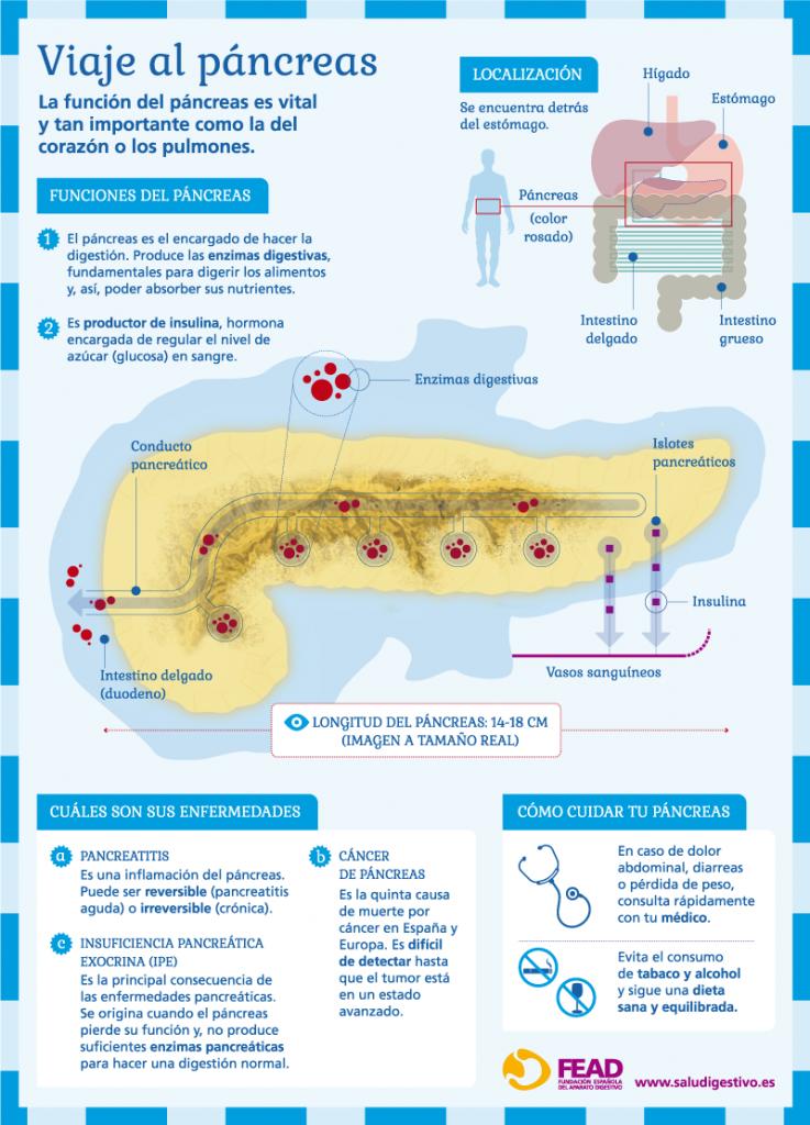infografia_viaje_al_pancreas-20141202094122